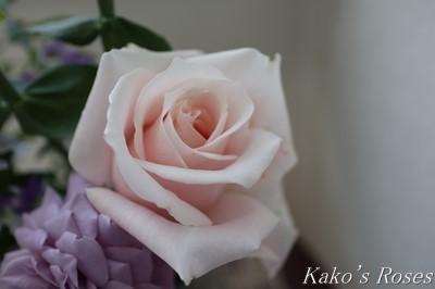s-IMG_0321kako_20181024134611eea.jpg