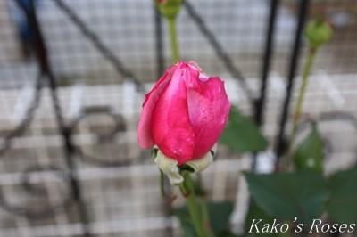 s-IMG_0328kako.jpg