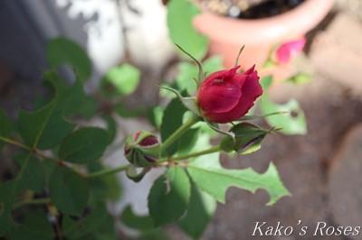 s-IMG_0331kako.jpg