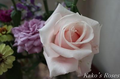 s-IMG_0335kako.jpg