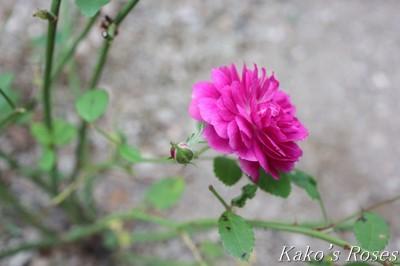 s-IMG_0351kako.jpg