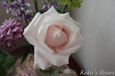 s-IMG_0353kako.jpg