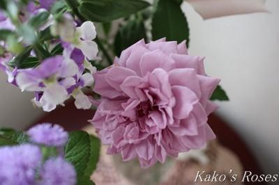 s-IMG_0354kako.jpg