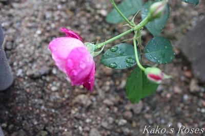 s-IMG_0356kako.jpg