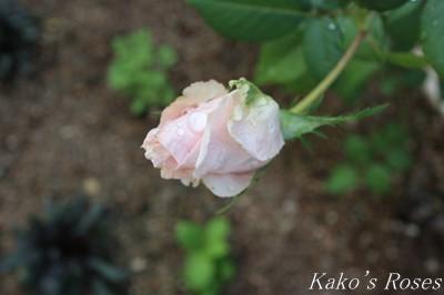 s-IMG_0357kako.jpg