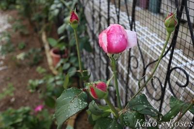 s-IMG_0358kako.jpg