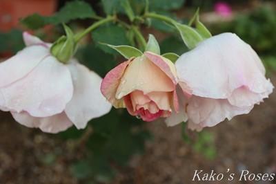 s-IMG_0362kako.jpg