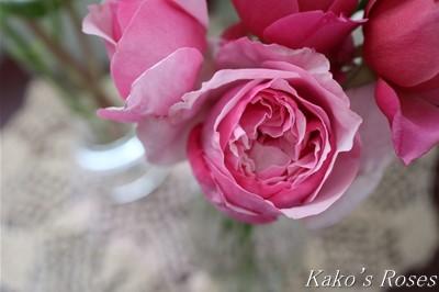 s-IMG_0374kako.jpg