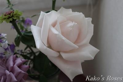 s-IMG_0379kako.jpg