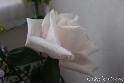 s-IMG_0383kako.jpg