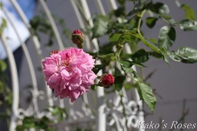 s-IMG_0387kako.jpg