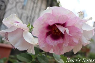 s-IMG_0391kako.jpg