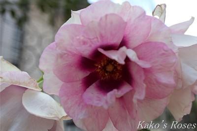 s-IMG_0392kako.jpg