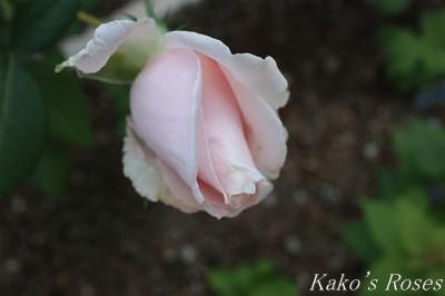 s-IMG_0393kako.jpg
