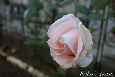 s-IMG_0396kako.jpg