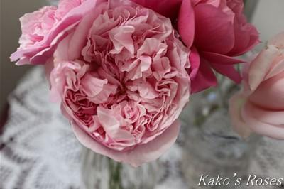 s-IMG_0400kako.jpg