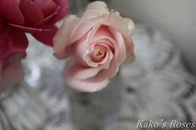 s-IMG_0401kako.jpg