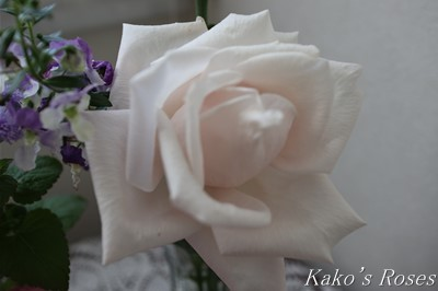 s-IMG_0402kako.jpg