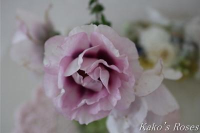 s-IMG_0406kako.jpg