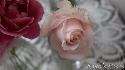 s-IMG_0408kako.jpg