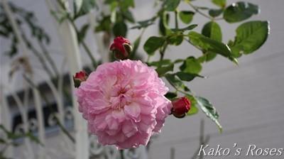 s-IMG_0413kako.jpg