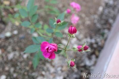 s-IMG_0422kako.jpg