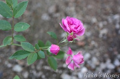 s-IMG_0423kako.jpg