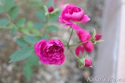 s-IMG_0440kako.jpg