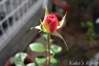 s-IMG_0443kako.jpg