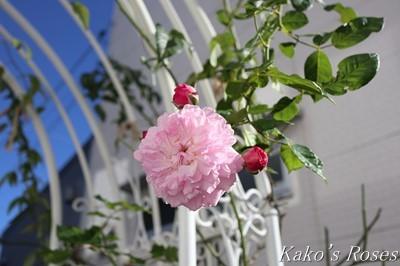 s-IMG_0445kako.jpg