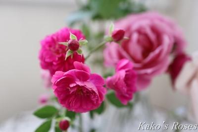 s-IMG_0449kako.jpg