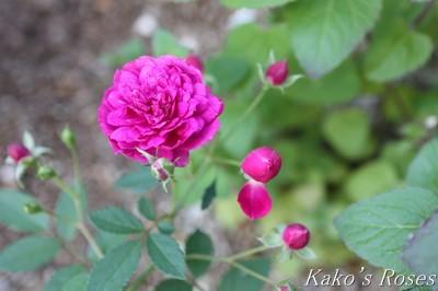 s-IMG_0451kako.jpg