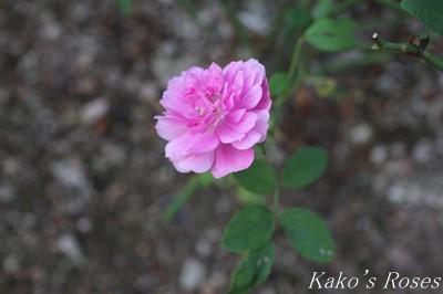 s-IMG_0452kako.jpg