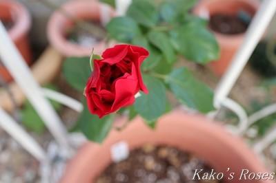 s-IMG_0459kako.jpg