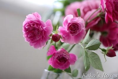 s-IMG_0464kako.jpg