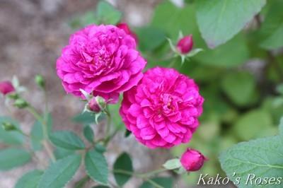 s-IMG_0468kako.jpg