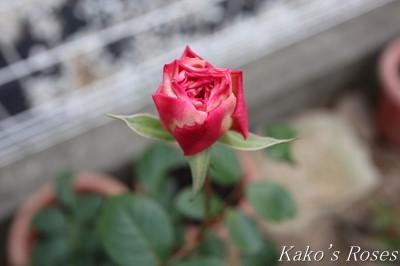 s-IMG_0473kako.jpg