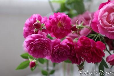 s-IMG_0479kako.jpg