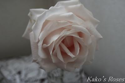 s-IMG_0489kako.jpg