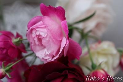 s-IMG_0491kako.jpg