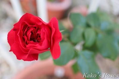s-IMG_0493kako.jpg