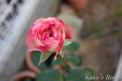s-IMG_0495kako.jpg