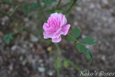 s-IMG_0500kako.jpg