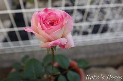 s-IMG_0503kako.jpg