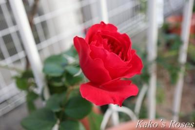 s-IMG_0505kako.jpg