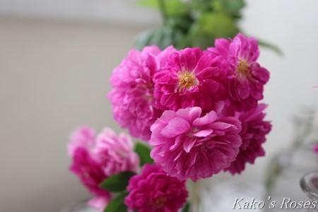 s-IMG_0506kako.jpg