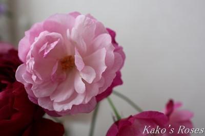 s-IMG_0511kako.jpg