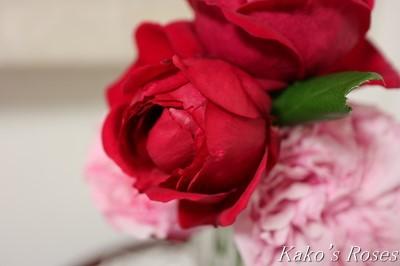 s-IMG_0528kako.jpg