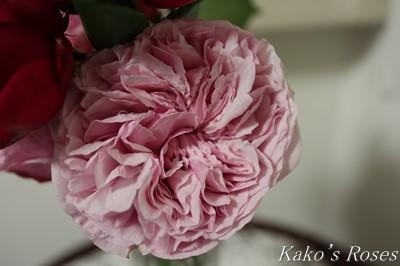 s-IMG_0529kako.jpg
