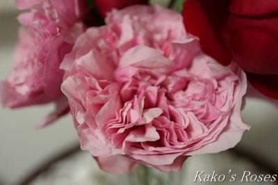 s-IMG_0530kako.jpg
